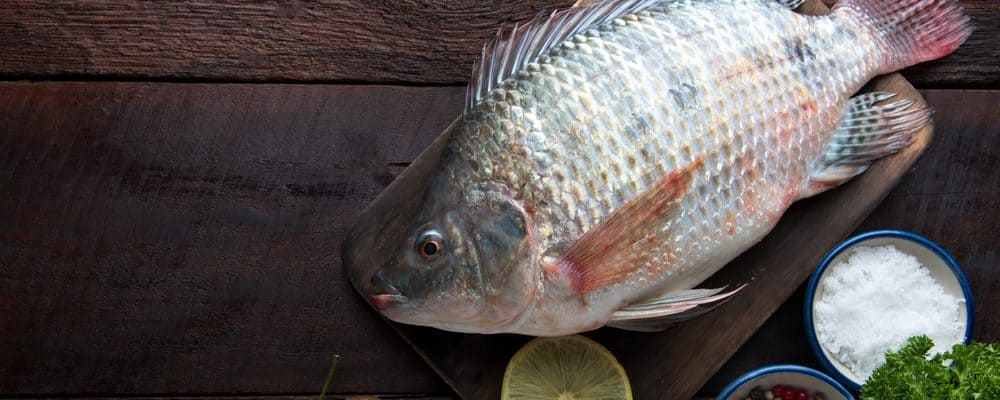 budidaya ikan mujair di kolam terpal